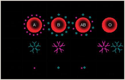 B Positive Food List Blood Type