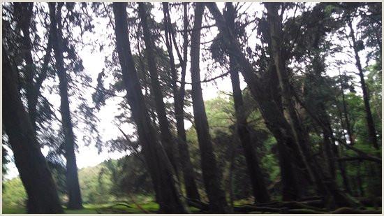 IMG WA0006 large fotografa de Bosque de la