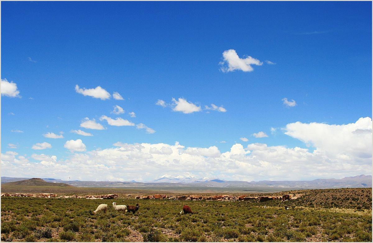Como Hacer Una Hoja De Vida Bolivia Altiplano andes Centrales La Enciclopedia Libre