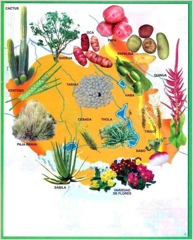 Como Hacer Una Hoja De Vida Bolivia Mapa Flora Del Departamento De oruro Mapas De Bolivia