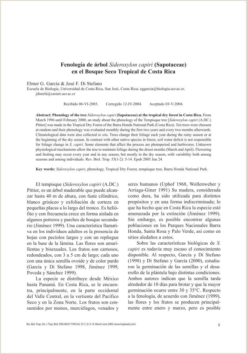 PDF Fenologa de árbol Sideroxylon capiri Sapotaceae en