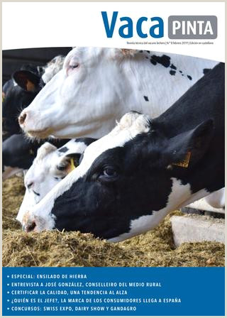 """Como Hacer Una Hoja De Vida En Ingles Vaca Pinta 8 Edicion Castelan by Transmedia Unicaci""""n"""