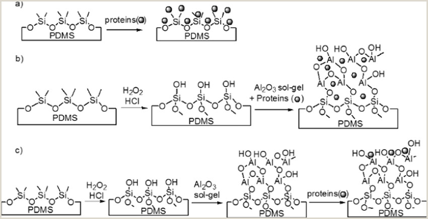 Scheme 1 Schematic representation of the different protein
