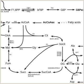 PDF Metabolic Pathway Analysis from small to genome scale