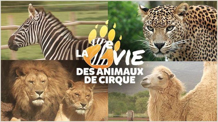 Cv Format For Job In Mauritius Gulli Les Meilleurs émissions Dessins Animés Séries Pour