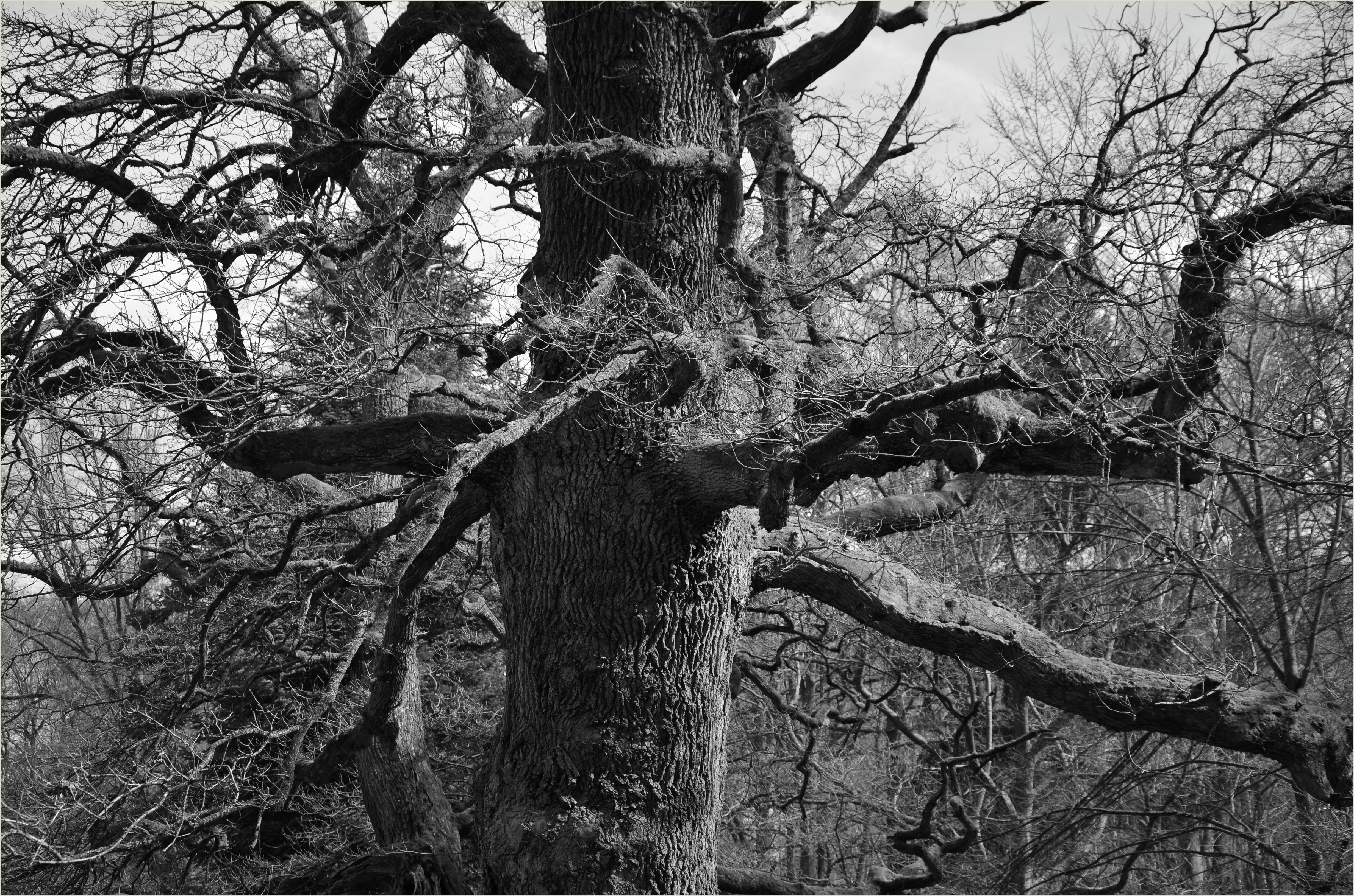Fotos gratis árbol naturaleza bosque rama invierno en