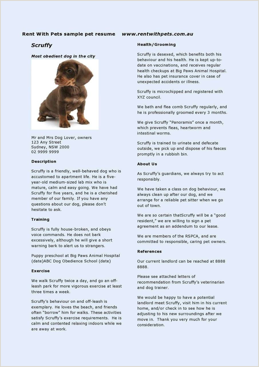 30 Examples Dog Walker Resume