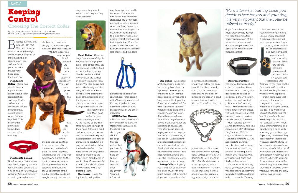 Dog Training Lesson Plan Template Press — Stephanie Bennett Houston