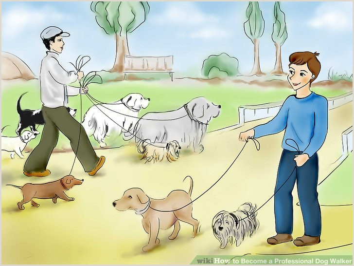 How to Be e a Professional Dog Walker with