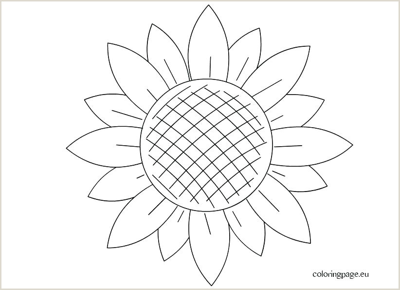 Flower Petal Template Sunflower Template to Cut Out – Trcroofing