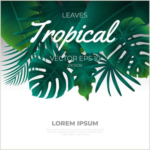 Fondo de plantilla de hojas tropicales de verano