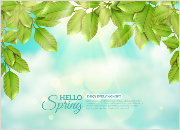 Formato De Hoja De Vida Kimberly Hojas Verdes En Los Rayos De sol De Primavera