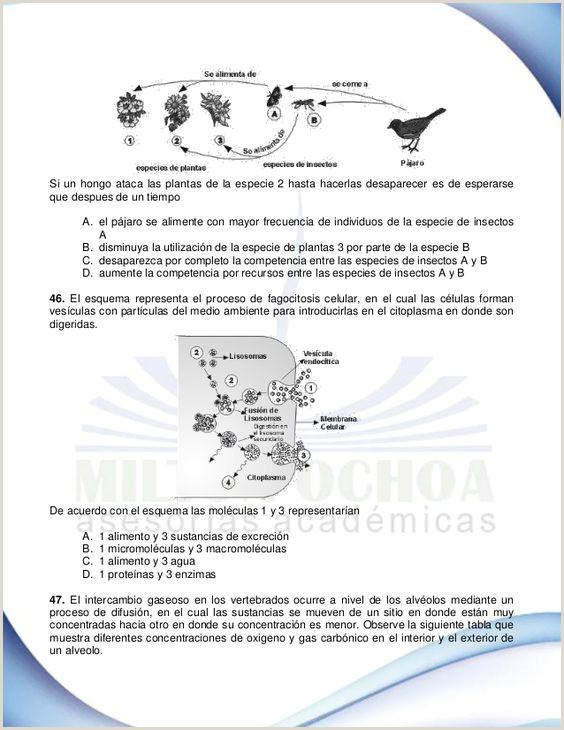 Formato De Hoja De Vida Minerva 1003 En Word Enith Ester Villalba torres Enithester En Pinterest