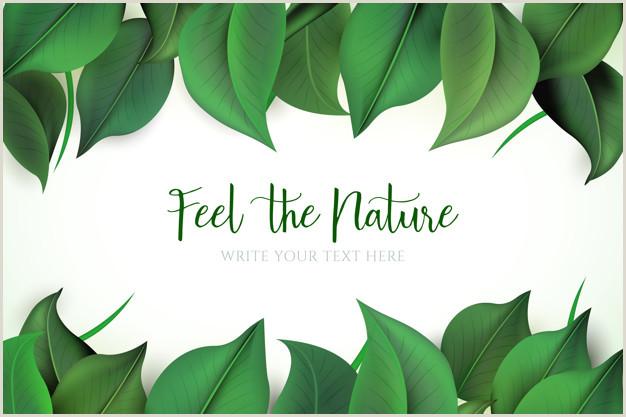 Formato Hoja De Vida Natural Fondo Natural Con Hojas Verdes
