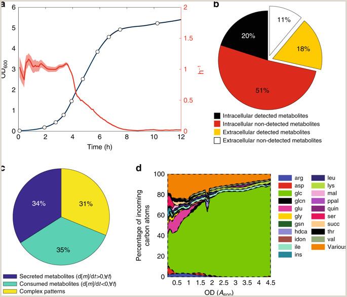 Regulatory mechanisms underlying coordination of amino acid