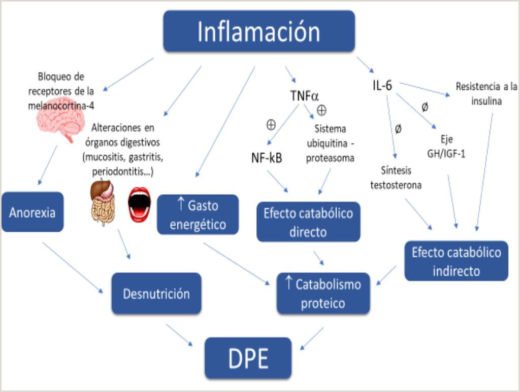 Hoja De Vida Minerva Editable Manual De Hemodilisis Domiciliaria Coordinadores Alejandro
