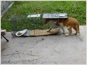 How to Trap Your Missing Cat in 6 Simple & Quick Steps