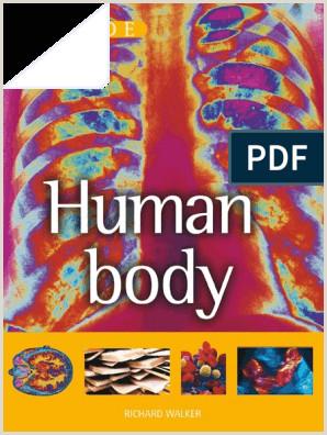 DK Guide to the Human Body pdf Bone