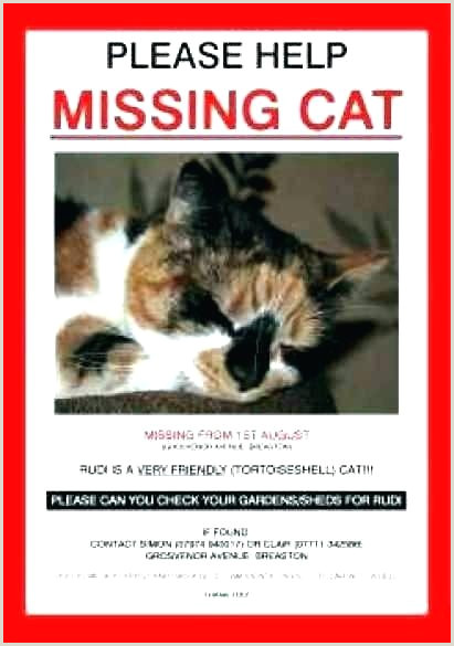 Lost Cat Poster Template Pet Flyer Missing Free