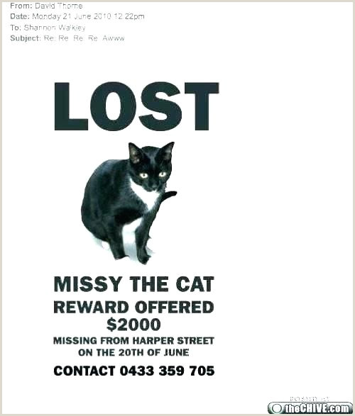 Lost Dog Flyer Template Found Flyers Pet Poster Free Missing