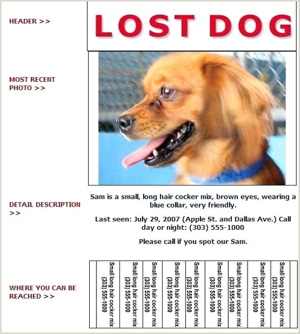Missing Dog Flyer Template New Found Pet Poster Free Cat Uk Lost
