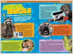 National Geographic Magazine Template 15 Best Children Magazine Design Images