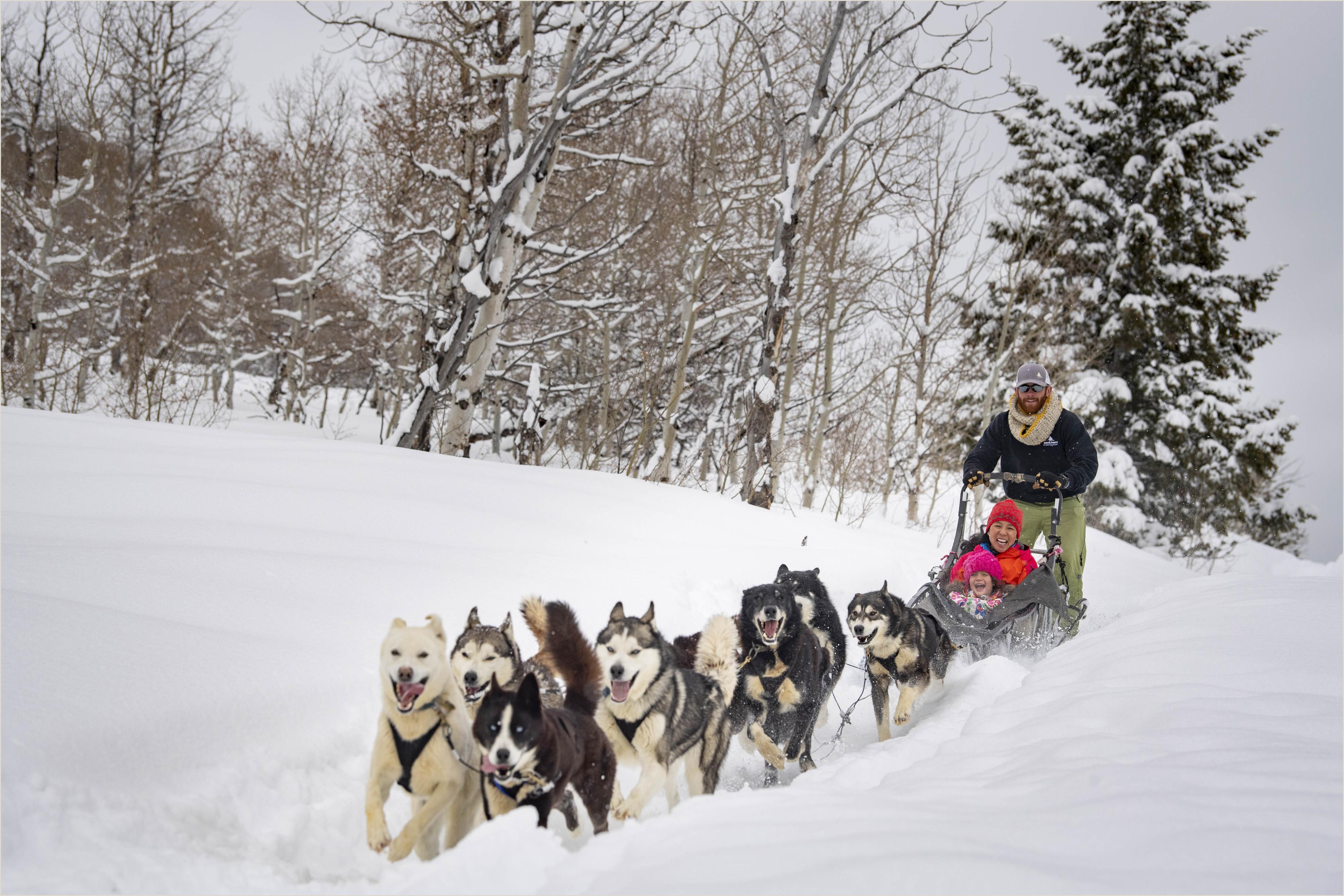 Dog Sledding in Park City Utah
