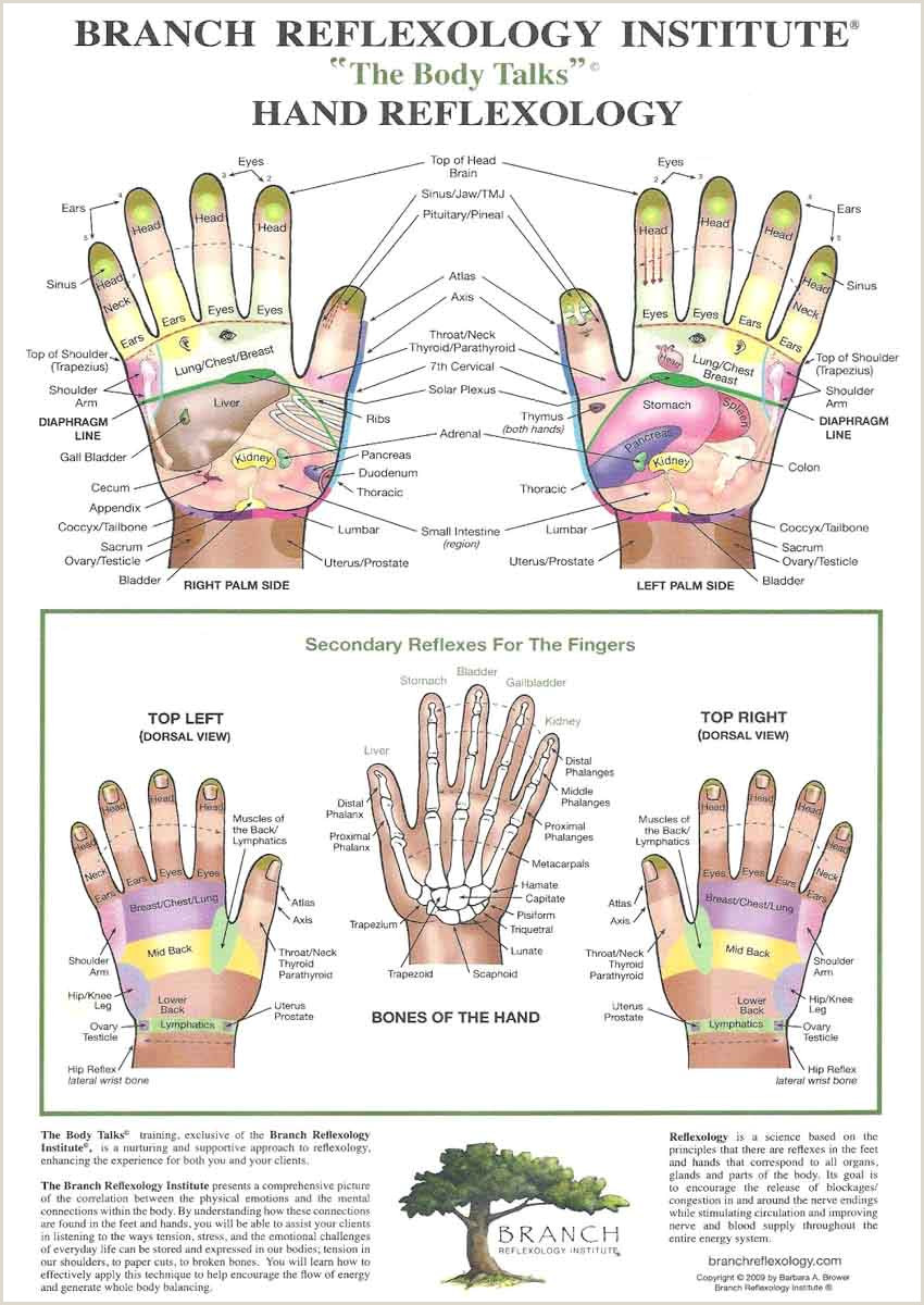 Hand Reflexology spine corresponds with radial thumb