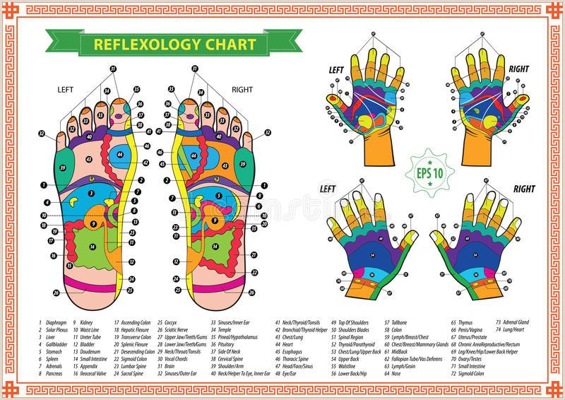 Reflexology Hand Map Chart Pedicurist Stock Illustrations Vecteurs & Clipart – 119