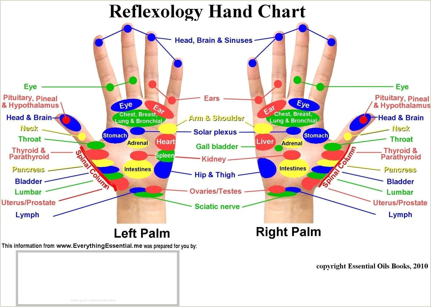reflexology Searchya Search Results Yahoo Search Results