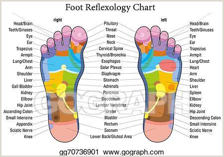 Reflexology Hand Map Chart Vector Art Foot Reflexology Chart Description Eps Clipart