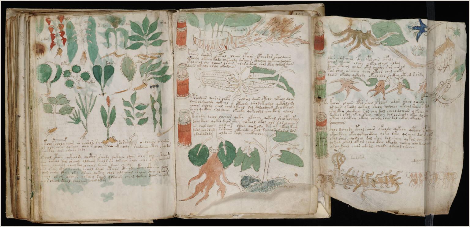 "Sample Confirmation Letter to Bishop Voynich Manuscript"" From"