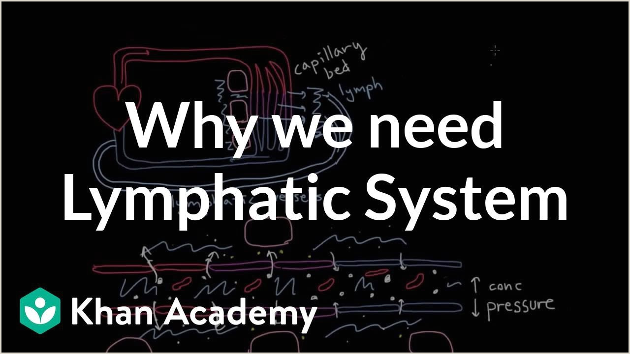 Why we need a lymphatic system video