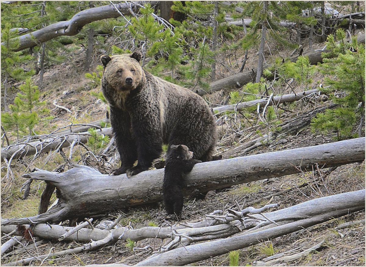 Department of the Interior announces rollback of endangered