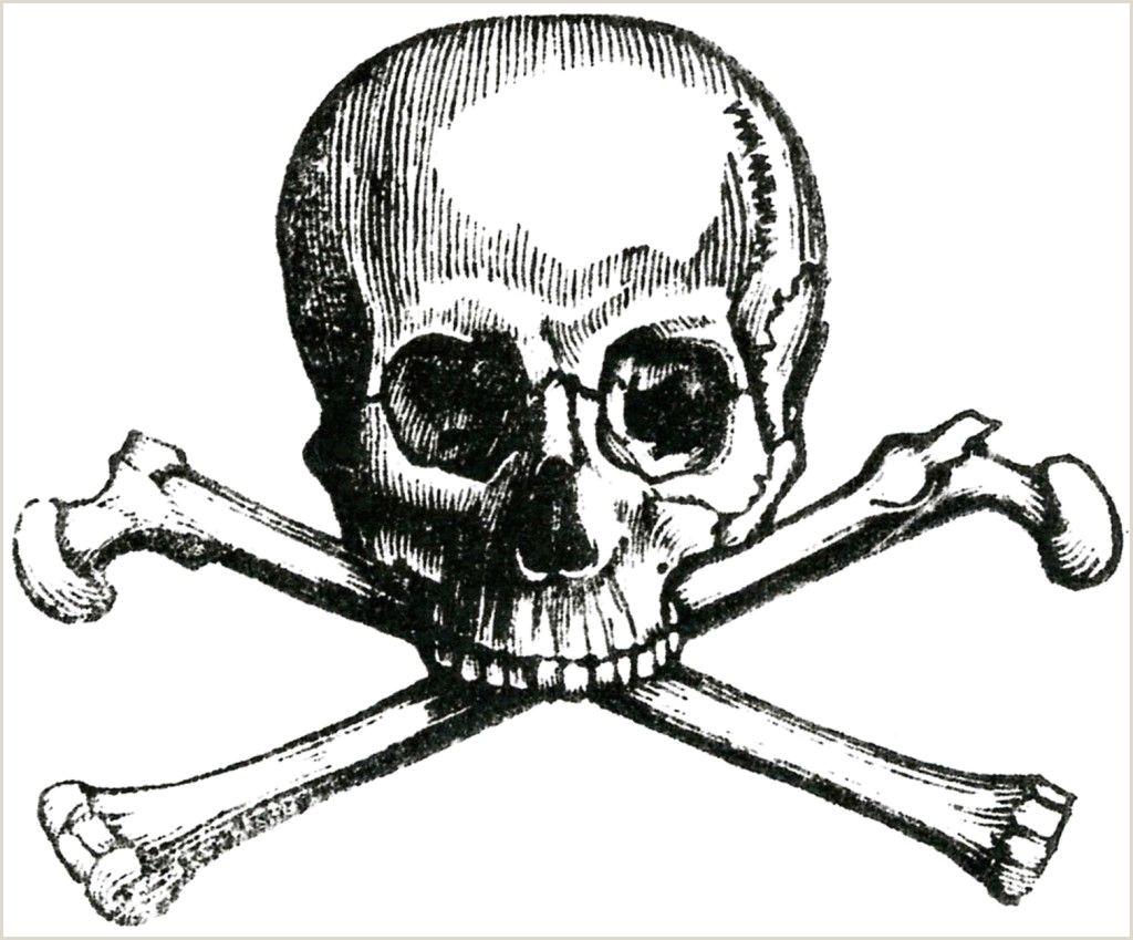 6 Skull Vintage Anatomy Clip Art Bones
