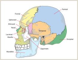 Skull and Crossbones Template Skull