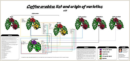 List of coffee varieties