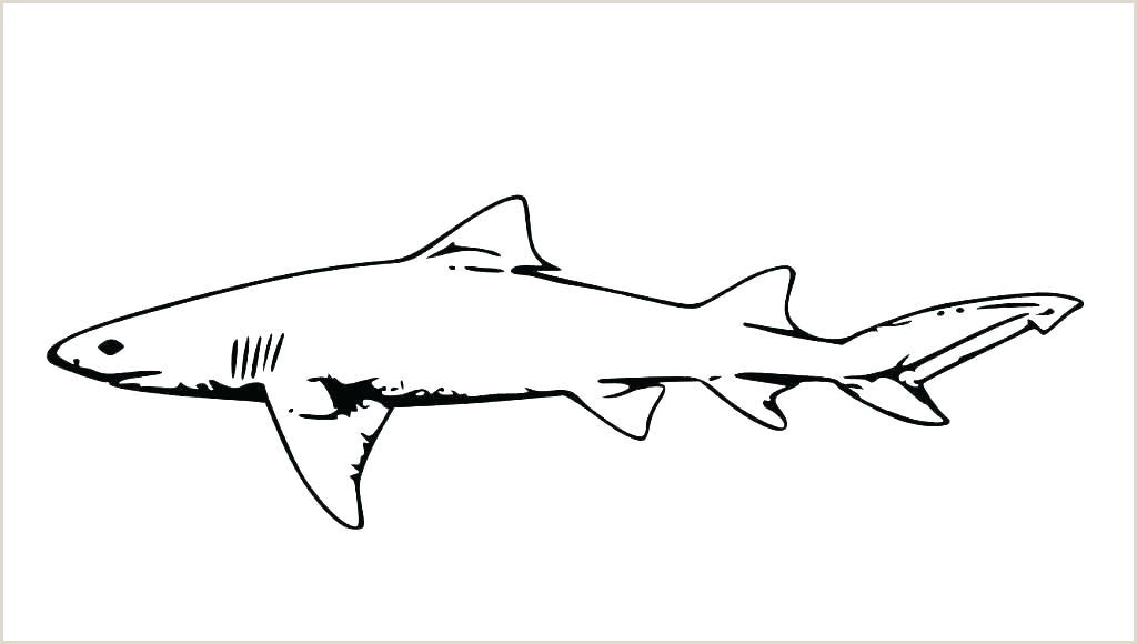 Fish Templates Free Premium Fin Template Printable Shark