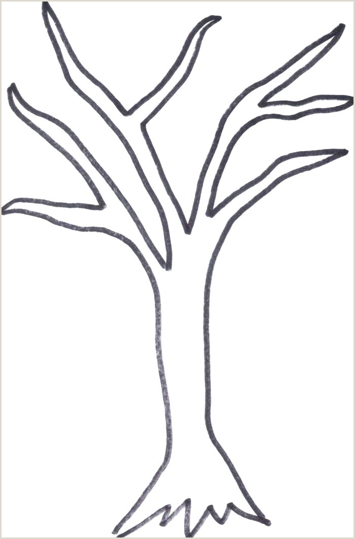 Bare Tree Branches Coloring Page Beautiful Outline