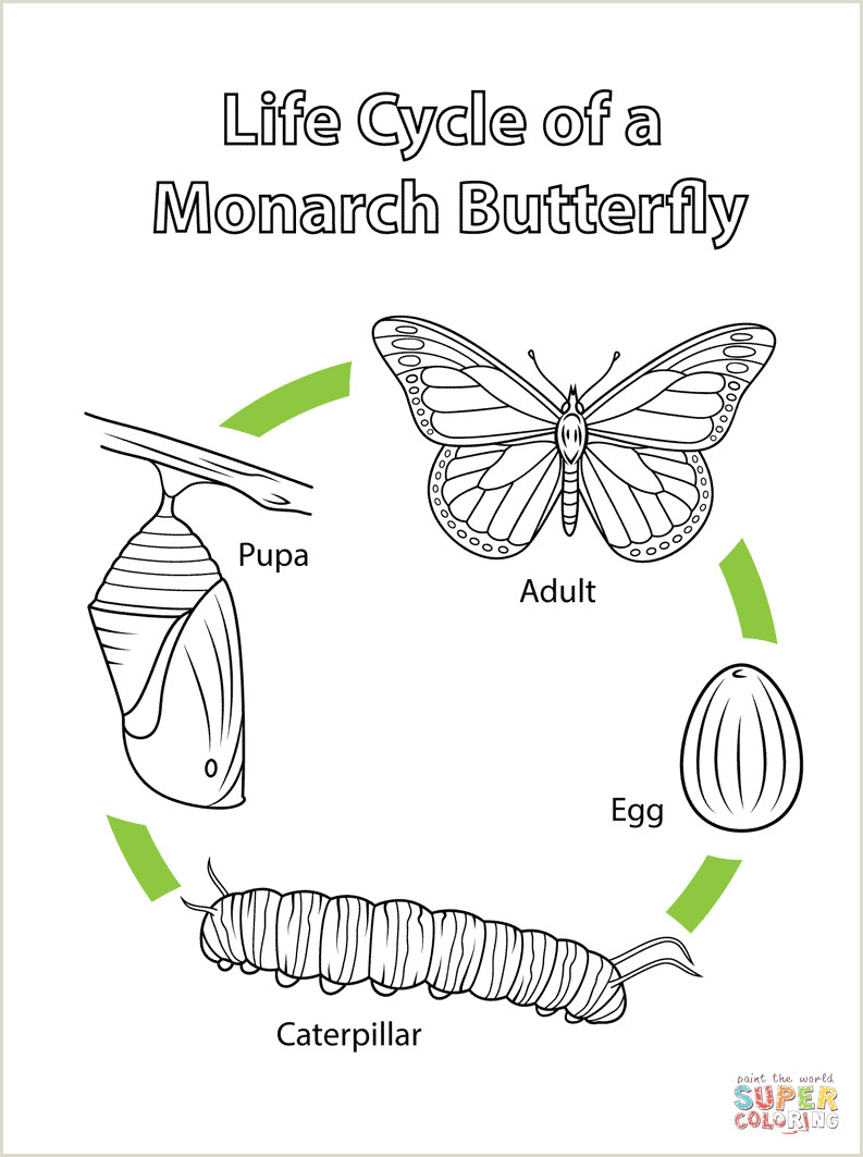 Color By Number Butterfly Coloring Pages