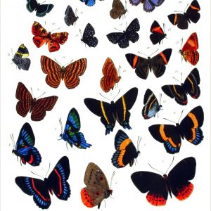 Color by Number Printable butterfly