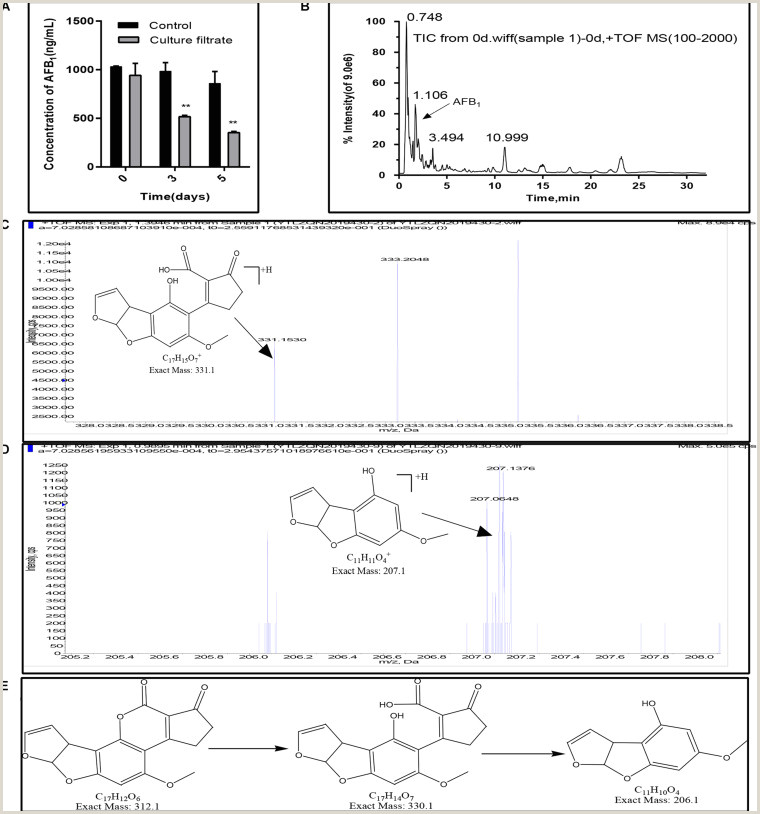 Attractive Names For Design Studio Inhibitory Effects Of Eurotium Cristatum On Growth And