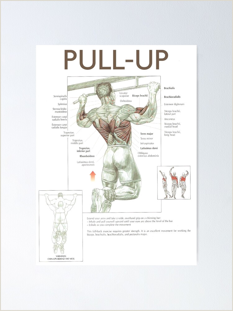 Pull Up Poster Pull Up Exercise Diagram