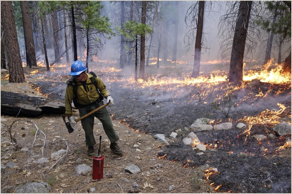 Agency Business Cards Federal Agencies Fall Short Of Trump Forest Protection Goals