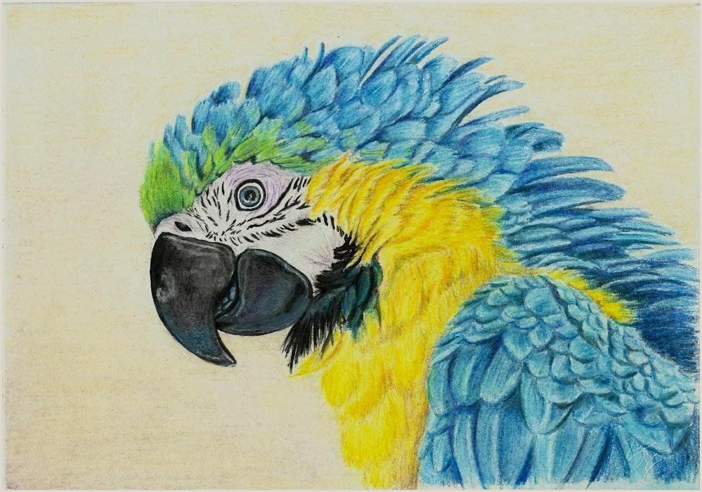 Best Business Cards For Pencil Artist Colored Pencils As An Instrument Of High Art Nuances Of