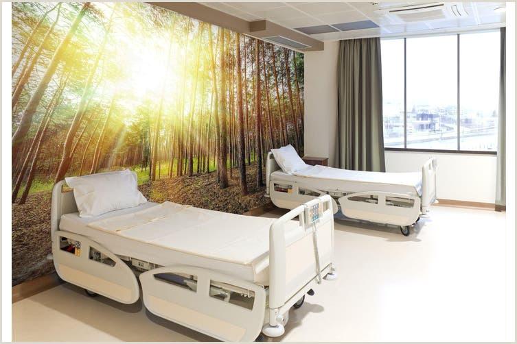 Design For Business 3d Business Wallpaper Forest Sunshine 0d Wall Murals Woven Paper Need Glue Xxl 312cm X 219cm Wxh 123 X87