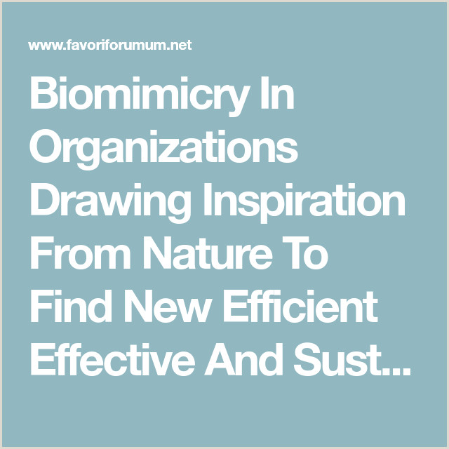 Examples Of Nature Of Business Biomimicry In Organizations Drawing Inspiration From Nature